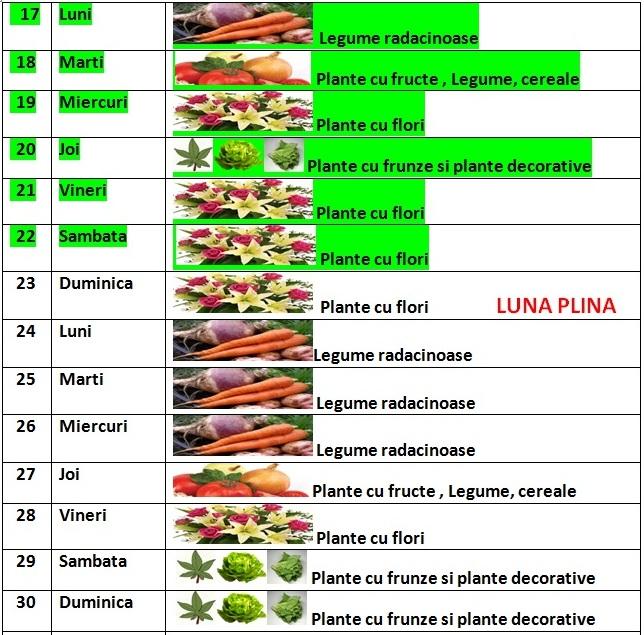 Calendarul_lunii_iunie_2013_pentru_ingrijire_plantare_recoltare_2