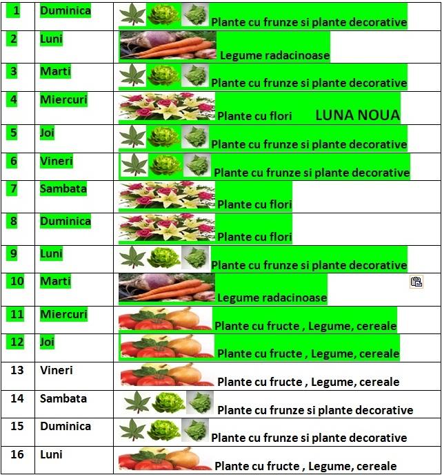 Calendarul_lunii_septembrie_pentru_gradina_1