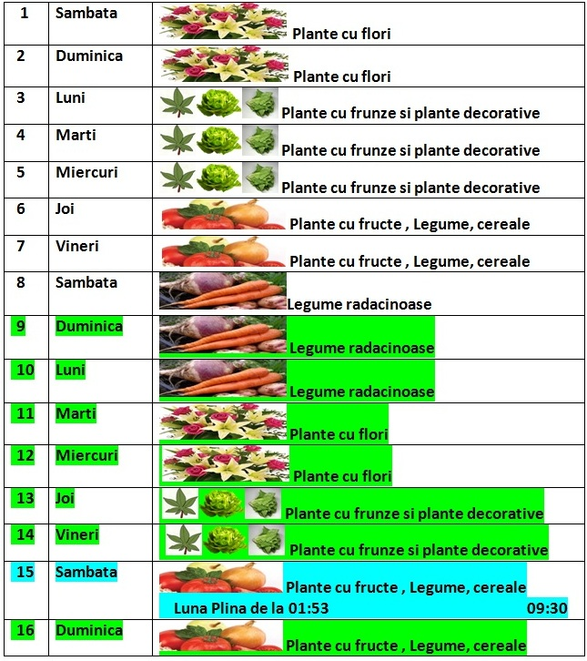 Calendarul_lunii_februarie_2014_pentru_gradina_si_flori